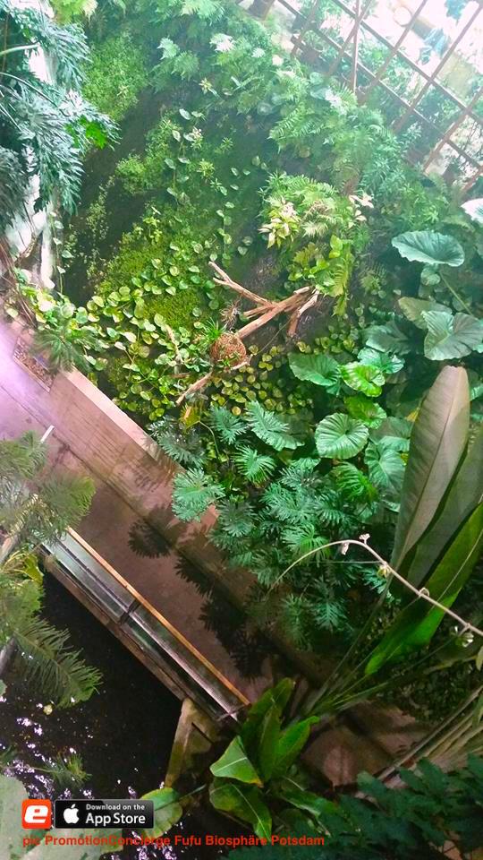 Wasser Wald Regenwald Biosphäre Potsdam Urwald nördlichen Vorstadt Brandenburgischen Hauptstadt