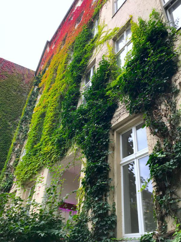 Garten Hof Grün Bepflanzung Gewerbefläche saniert Heckmann Hoefe Oranienburger Strasse Synagoge Dr Joachim Koehrich Vermietung